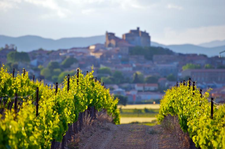 Vinmarker i Languedoc Roussillon